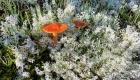 eKearsarge lichens - 1